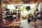 birdhouseshop
