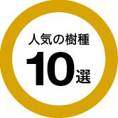 人気の樹種 10選